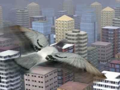 Jogo Fly Like a bird 3 Online Gratis